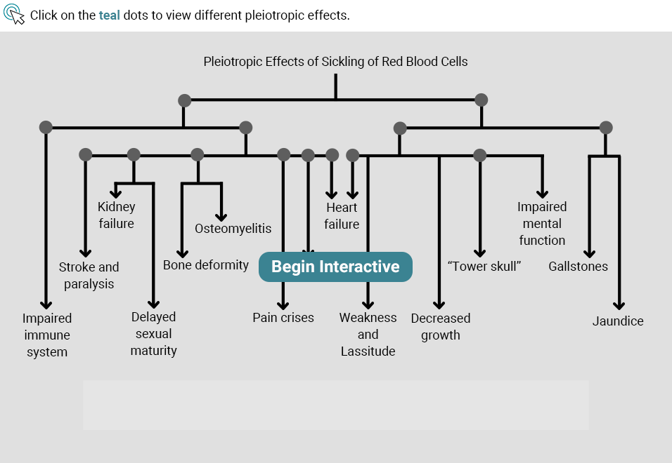 Cascade of Possible Phenotype Changes