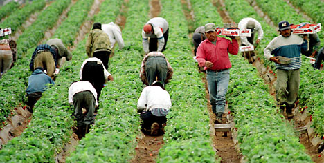There are some industries, such the agricultural sector among others, that rely heavily on the work of immigrants (Fussell, 2011).